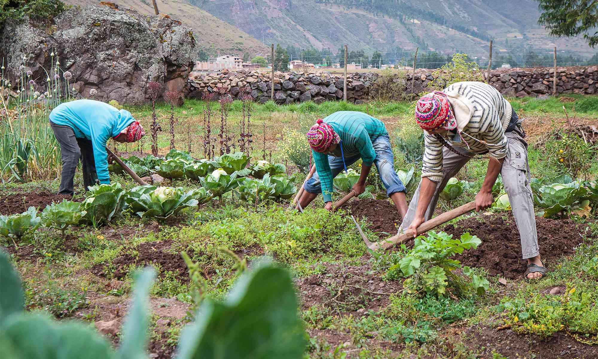 Kusi Ñan Organic Farm – The Kusi Kawsay Association